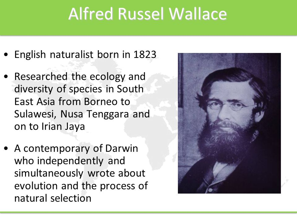 Alfred Russel Wallace English naturalist born in 1823 Researched the ecology and diversity of species in South East Asia from Borneo to Sulawesi, Nusa Tenggara and on to Irian Jaya A contemporary of Darwin who independently and simultaneously wrote about evolution and the process of natural selection