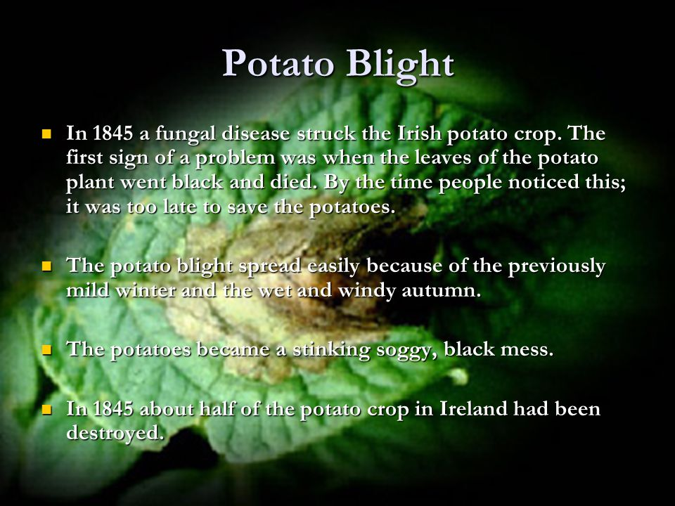 Potato Blight In 1845 a fungal disease struck the Irish potato crop.