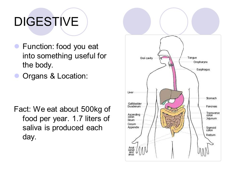 DIGESTIVE Function: food you eat into something useful for the body.