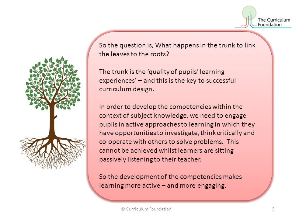 So the question is, What happens in the trunk to link the leaves to the roots.