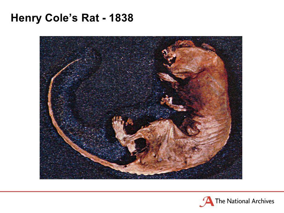 Henry Cole's Rat - 1838