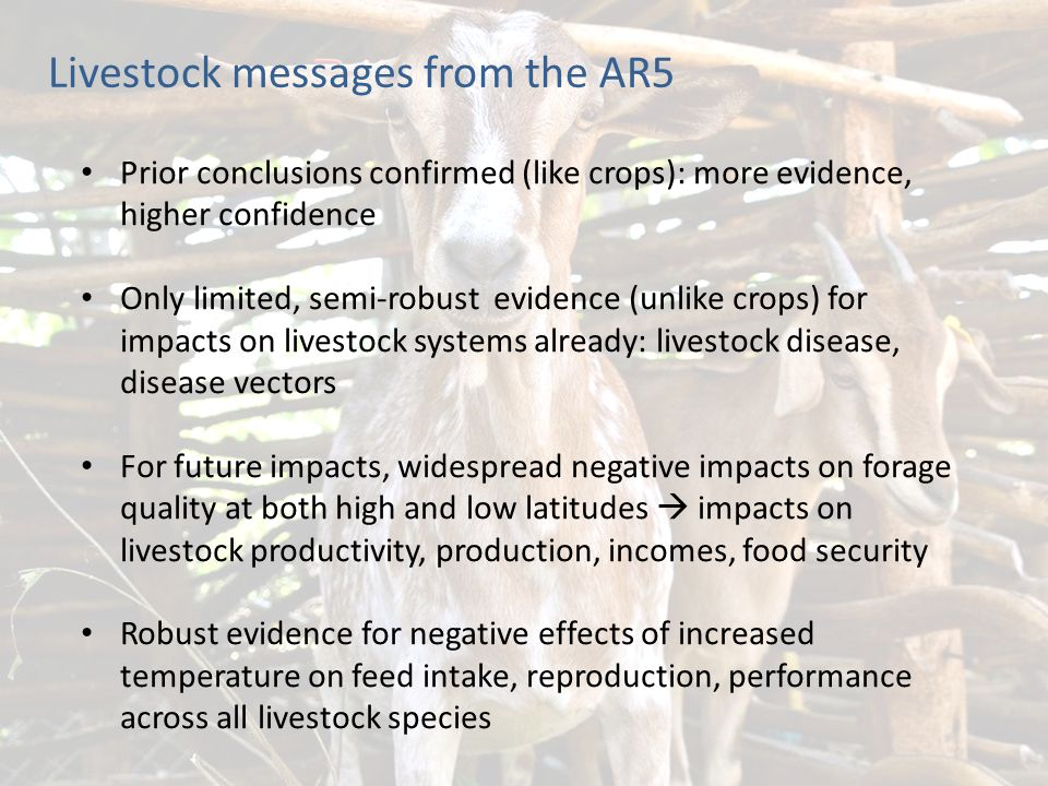 Livestock messages from the AR5 Prior conclusions confirmed (like crops): more evidence, higher confidence Only limited, semi-robust evidence (unlike crops) for impacts on livestock systems already: livestock disease, disease vectors For future impacts, widespread negative impacts on forage quality at both high and low latitudes  impacts on livestock productivity, production, incomes, food security Robust evidence for negative effects of increased temperature on feed intake, reproduction, performance across all livestock species