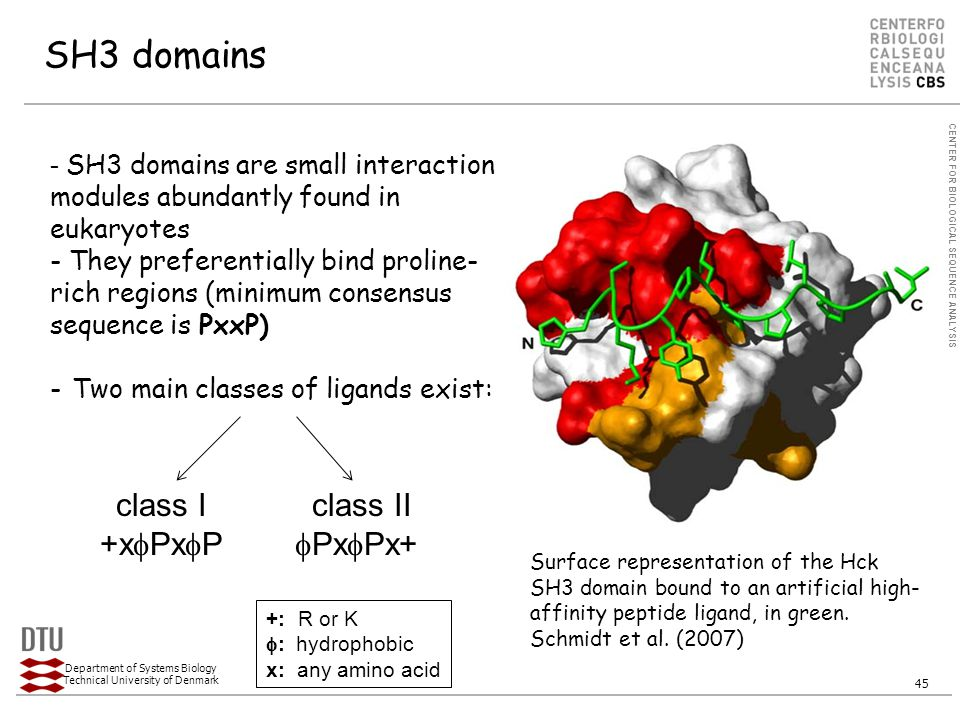 CENTER FOR BIOLOGICAL SEQUENCE ANALYSIS Department of Systems Biology Technical University of Denmark 45 SH3 domains - SH3 domains are small interaction modules abundantly found in eukaryotes - They preferentially bind proline- rich regions (minimum consensus sequence is PxxP) - Two main classes of ligands exist: Surface representation of the Hck SH3 domain bound to an artificial high- affinity peptide ligand, in green.