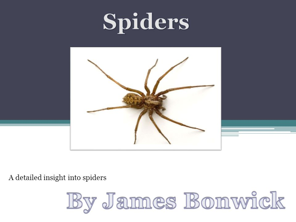 A detailed insight into spiders