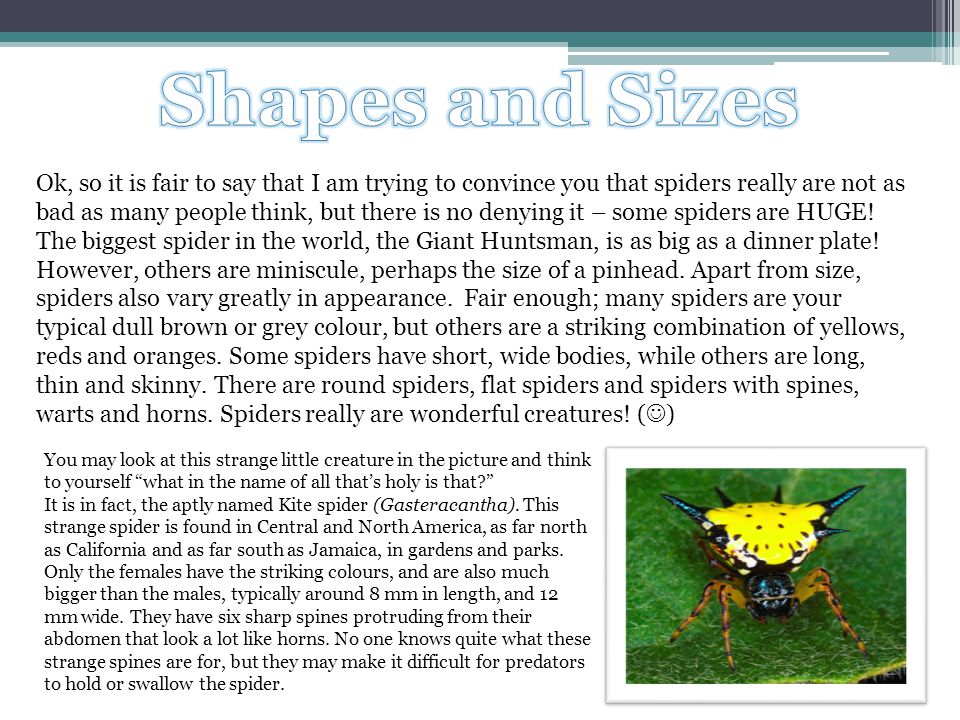 Ok, so it is fair to say that I am trying to convince you that spiders really are not as bad as many people think, but there is no denying it – some s