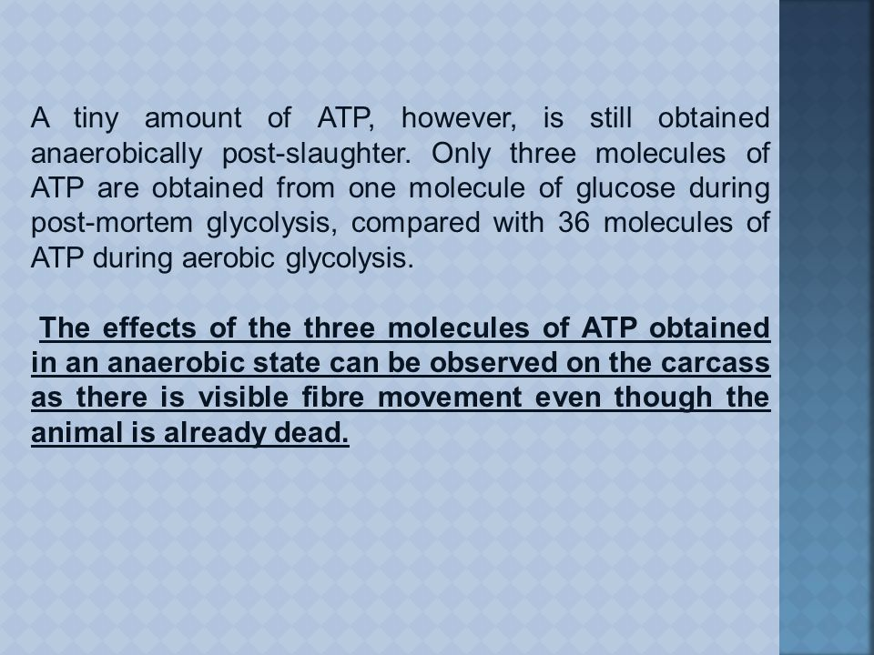 A tiny amount of ATP, however, is still obtained anaerobically post-slaughter.