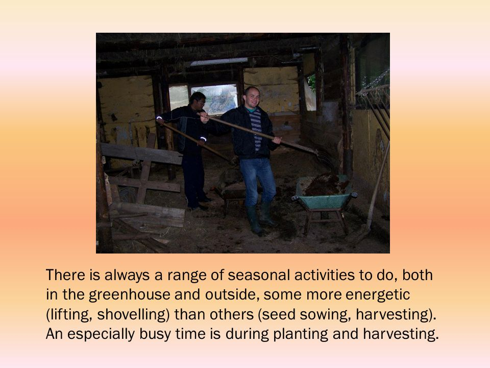There is always a range of seasonal activities to do, both in the greenhouse and outside, some more energetic (lifting, shovelling) than others (seed sowing, harvesting).
