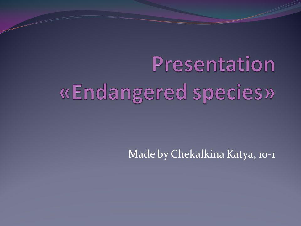 Made by Chekalkina Katya, 10-1