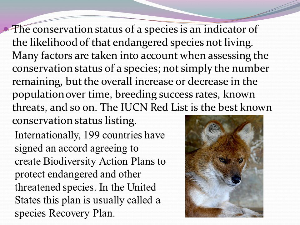 The conservation status of a species is an indicator of the likelihood of that endangered species not living.