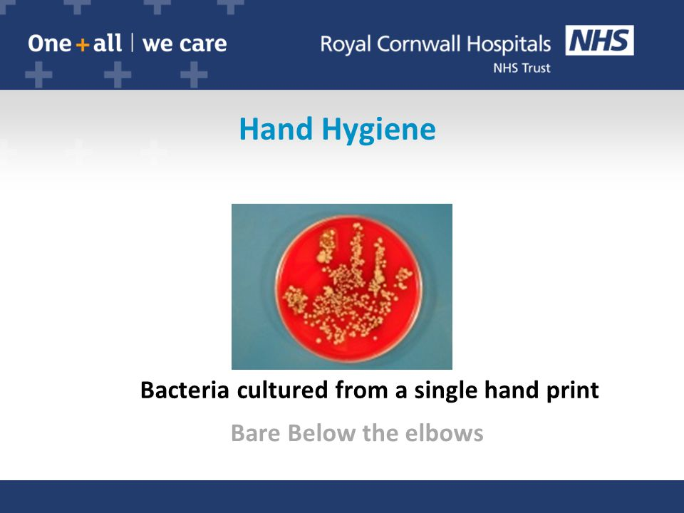 Hand Hygiene Bacteria cultured from a single hand print Bare Below the elbows