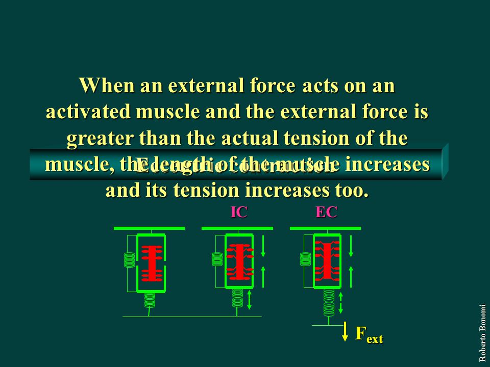 Eccentric contraction When an external force acts on an activated muscle and the external force is greater than the actual tension of the muscle, the