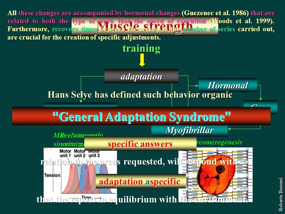 Reclutamento unita motrice Muscle strength training adaptation Neural Myofibrillar Sarcomerogenesis Mus e/o muscolo sincronizzazione Hormonal Gene Rob