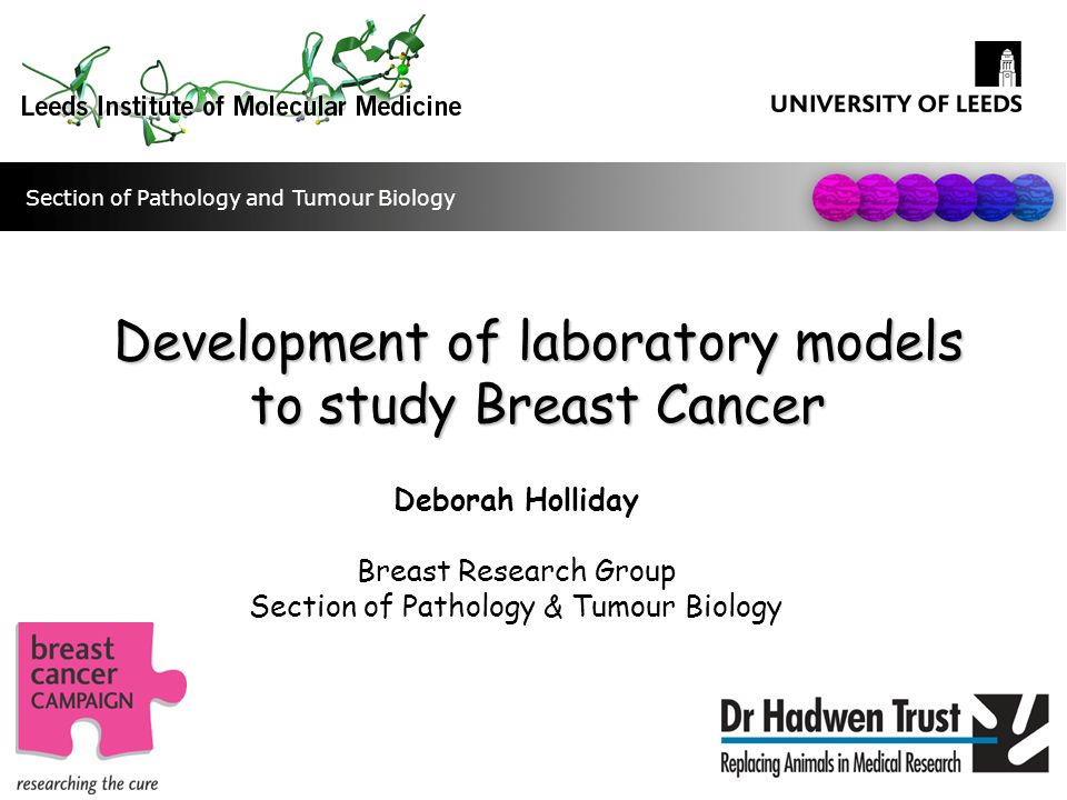 Using 3D models to study radio- resistance in Breast Cancer Laura Smith Breast Research Group Section of Pathology & Tumour Biology Section of Pathology and Tumour Biology