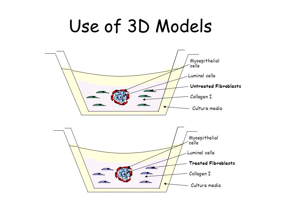 Use of 3D Models