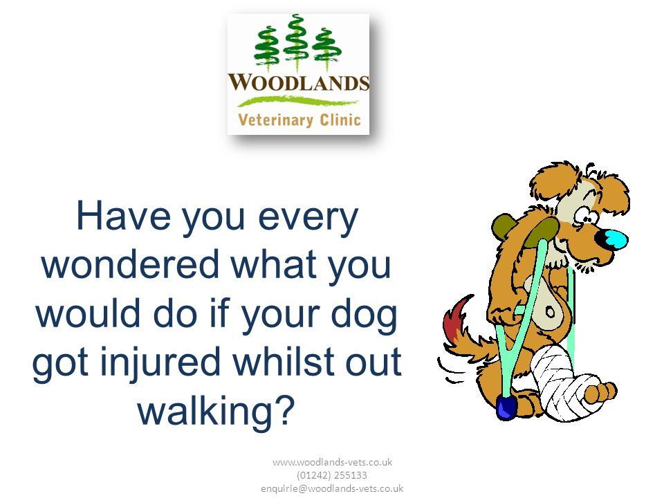 Have you every wondered what you would do if your dog got injured whilst out walking.