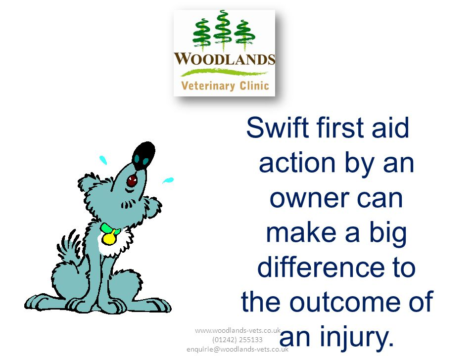 Swift first aid action by an owner can make a big difference to the outcome of an injury.