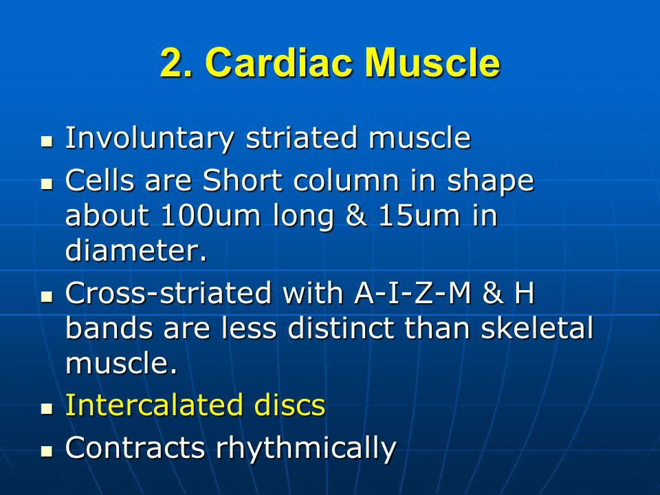 2. Cardiac Muscle Involuntary striated muscle Involuntary striated muscle Cells are Short column in shape about 100um long & 15um in diameter. Cells a