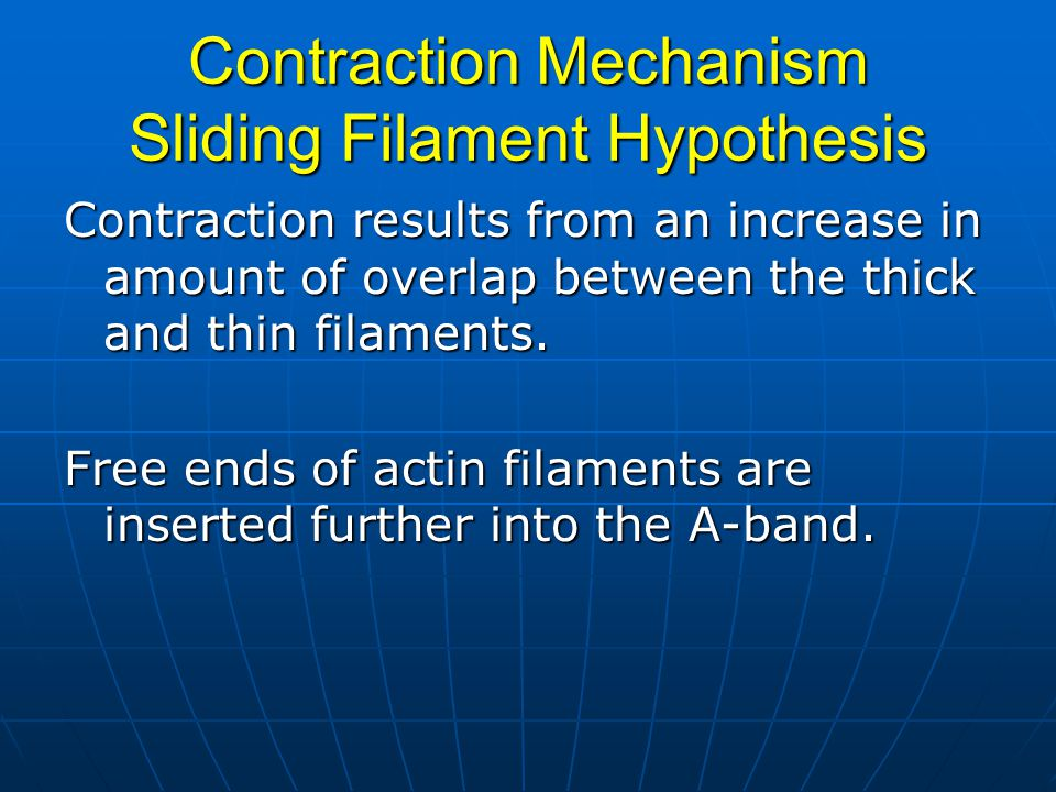 Contraction Mechanism Sliding Filament Hypothesis Contraction results from an increase in amount of overlap between the thick and thin filaments.