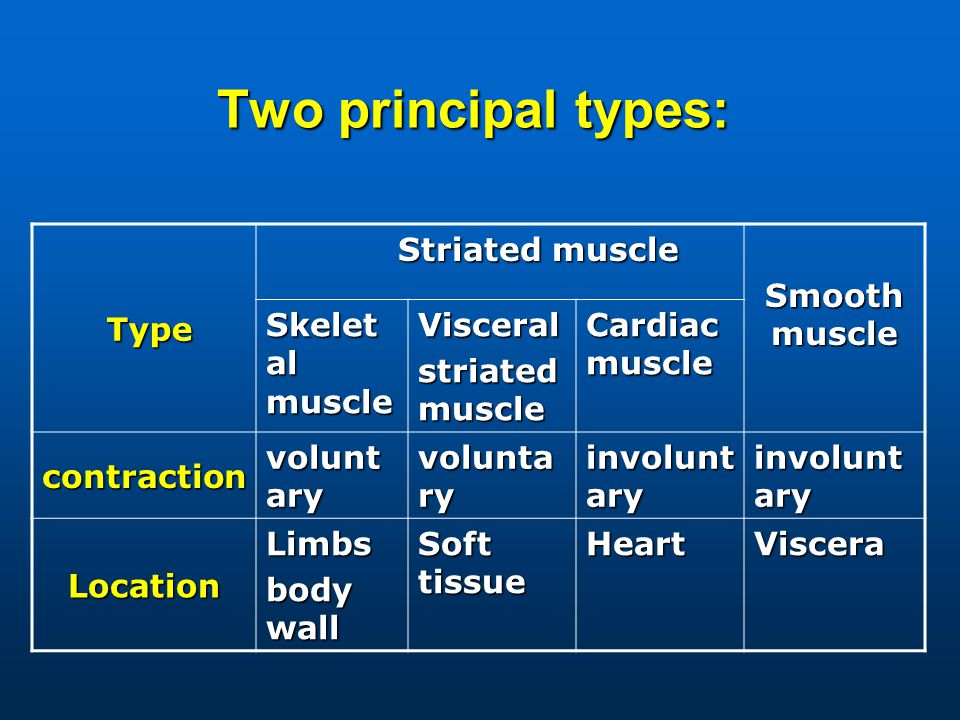Two principal types: Type Type Striated muscle Striated muscle Smooth muscle Skelet al muscle Visceral striated muscle Cardiac muscle contraction volunt ary involunt ary Location Limbs body wall Soft tissue HeartViscera