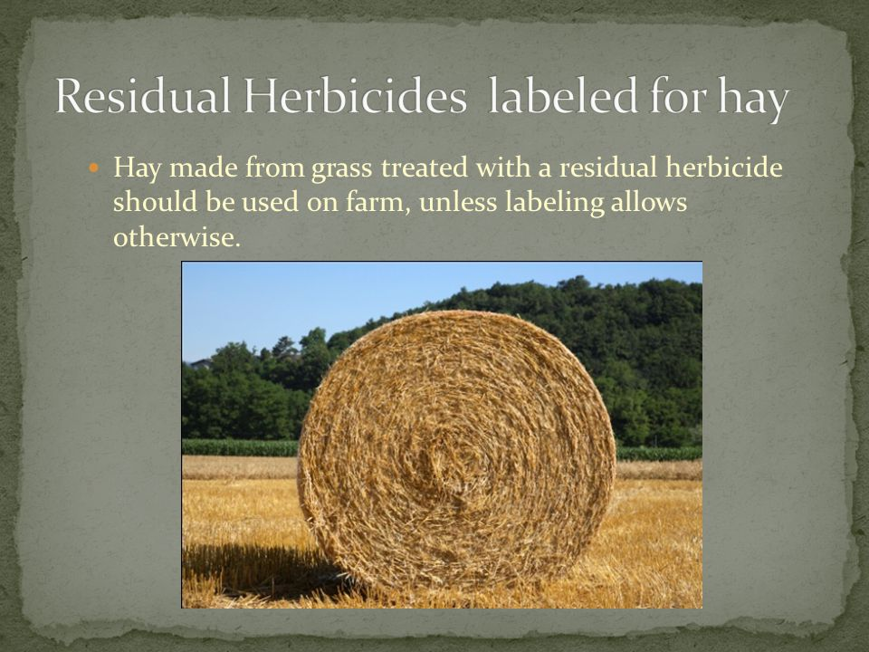 Hay made from grass treated with a residual herbicide should be used on farm, unless labeling allows otherwise.