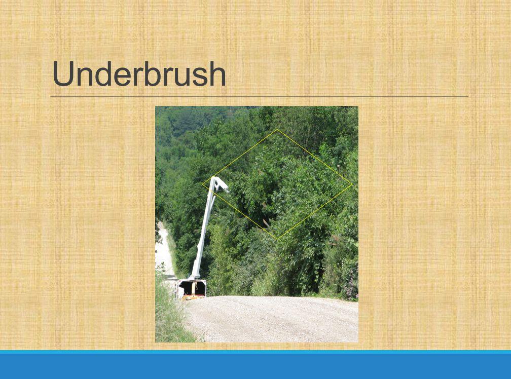 Underbrush