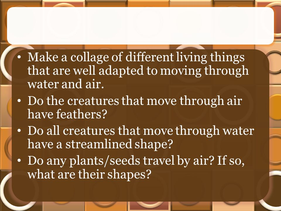 Make a collage of different living things that are well adapted to moving through water and air.