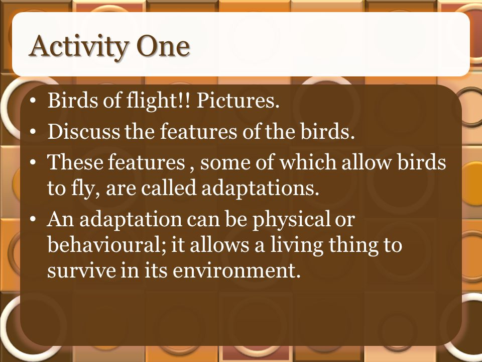 Activity One Birds of flight!. Pictures. Discuss the features of the birds.