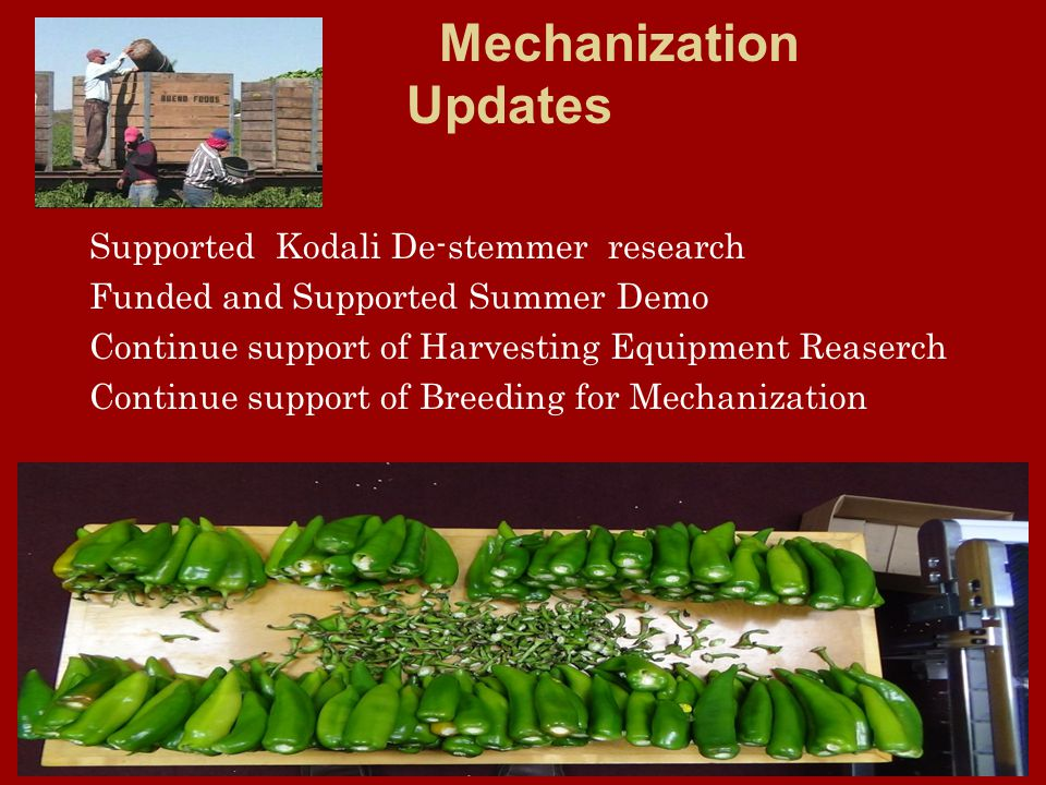 Mechanization Updates Supported Kodali De-stemmer research Funded and Supported Summer Demo Continue support of Harvesting Equipment Reaserch Continue support of Breeding for Mechanization