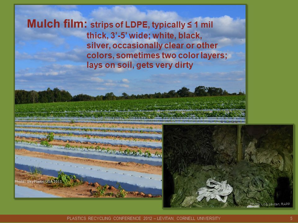 Mulch film: strips of LDPE, typically ≤ 1 mil thick, 3'-5' wide; white, black, silver, occasionally clear or other colors, sometimes two color layers; lays on soil, gets very dirty Photo: SkyPlastic USA 2011 PLASTICS RECYCLING CONFERENCE 2012 – LEVITAN, CORNELL UNIVERSITY 5 Photo: Lois Levitan, RAPP