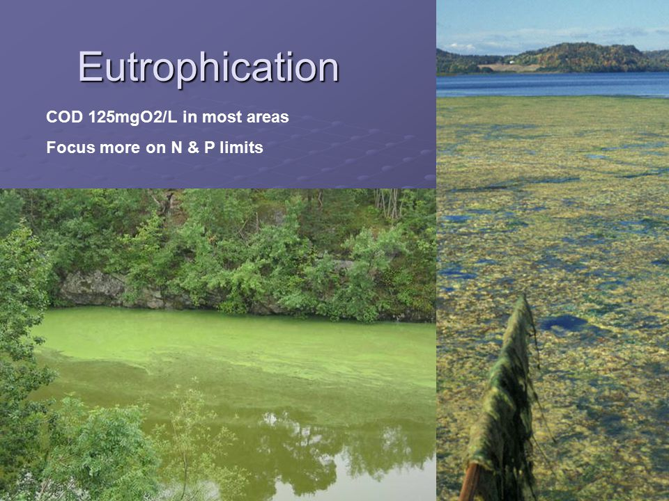 EutrophicationEutrophication COD 125mgO2/L in most areas Focus more on N & P limits