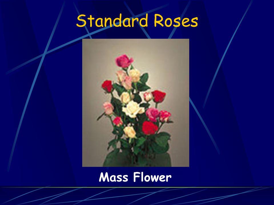 Standard Roses Mass Flower