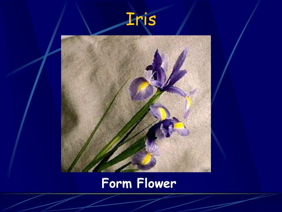 Iris Form Flower