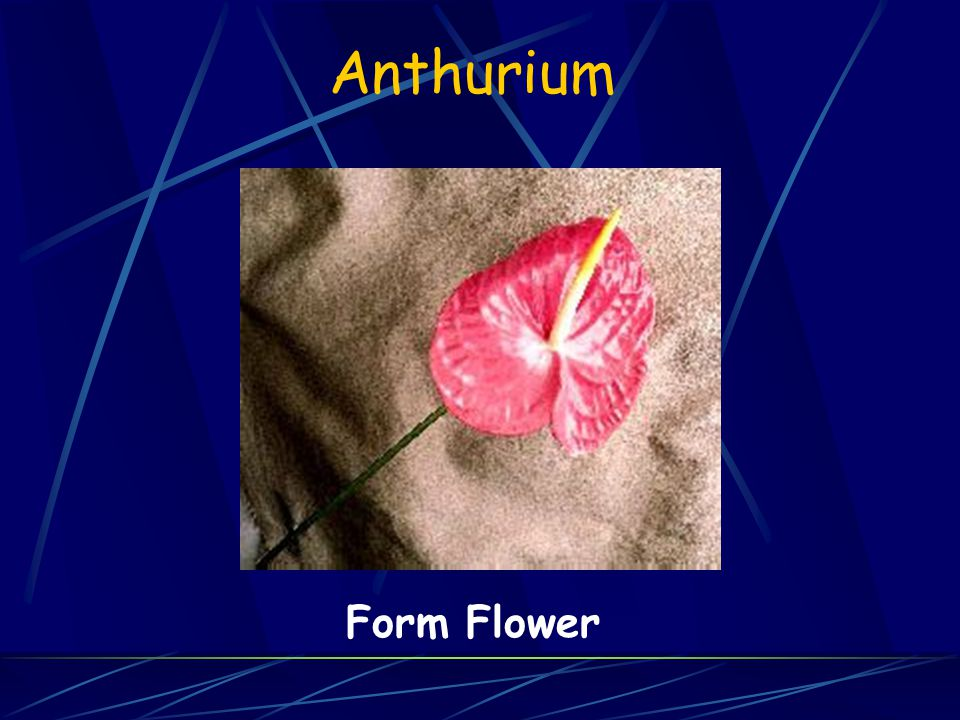 Anthurium Form Flower