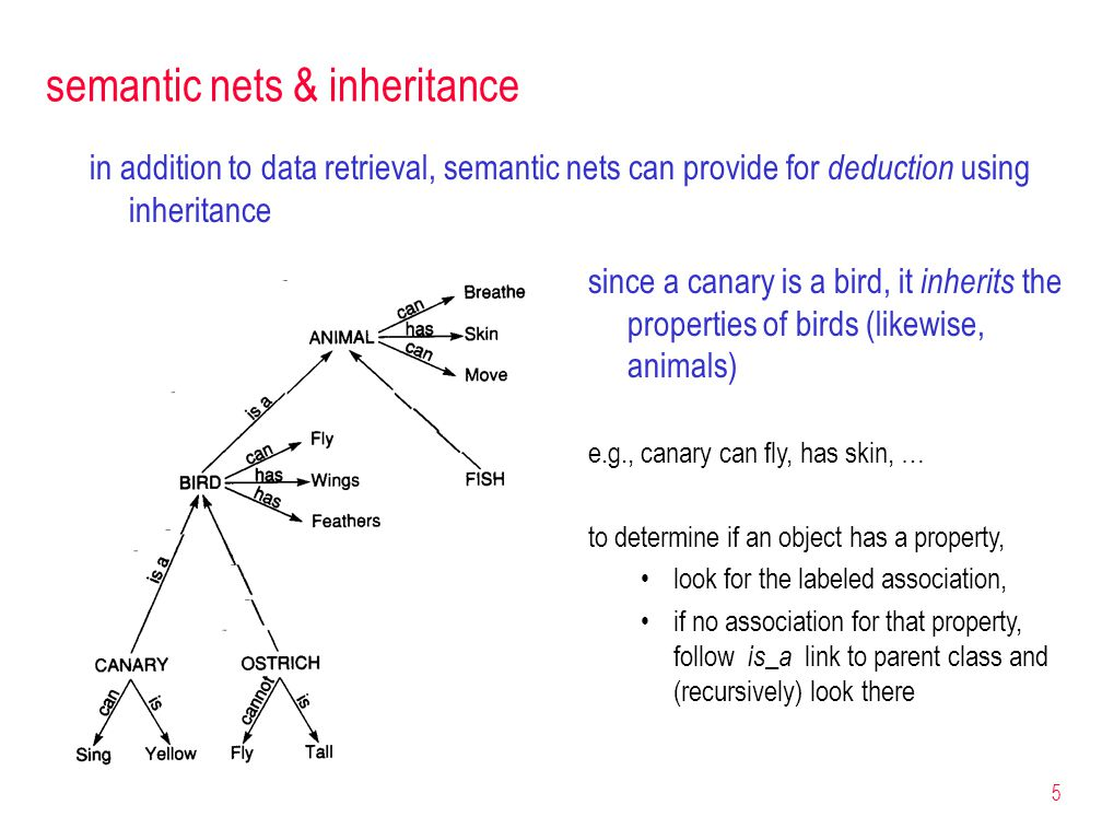 5 semantic nets & inheritance in addition to data retrieval, semantic nets can provide for deduction using inheritance since a canary is a bird, it inherits the properties of birds (likewise, animals) e.g., canary can fly, has skin, … to determine if an object has a property, look for the labeled association, if no association for that property, follow is_a link to parent class and (recursively) look there