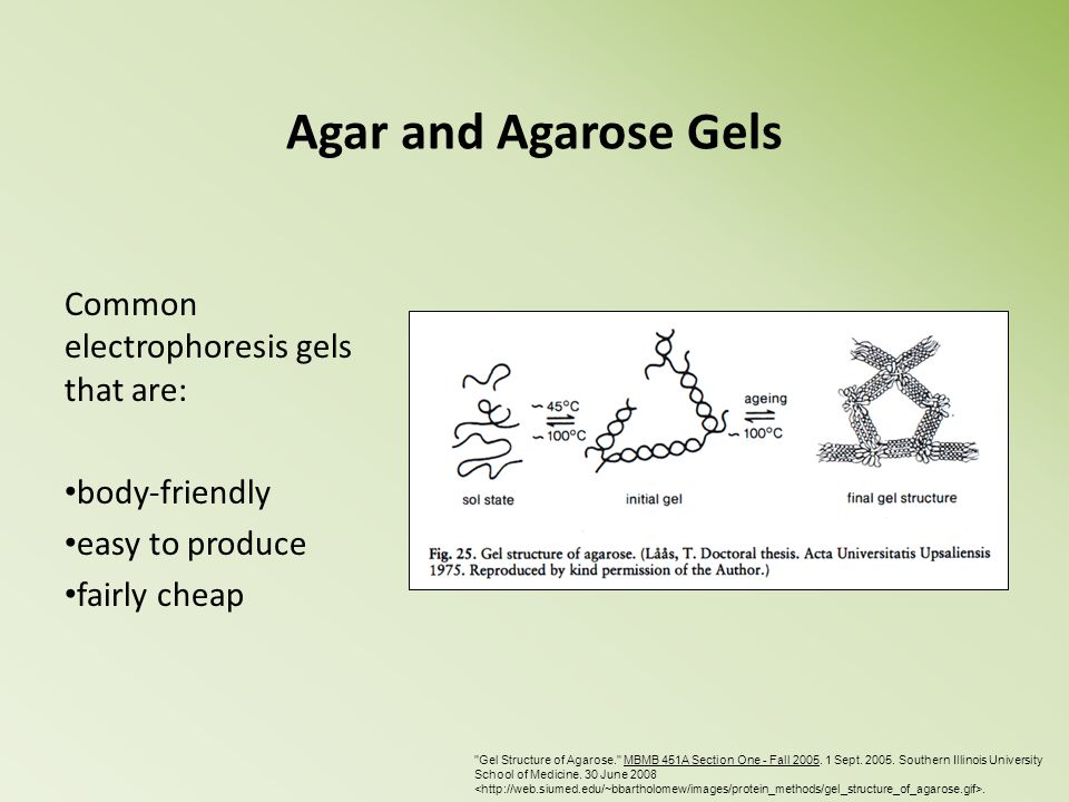 Agar and Agarose Gels Common electrophoresis gels that are: body-friendly easy to produce fairly cheap