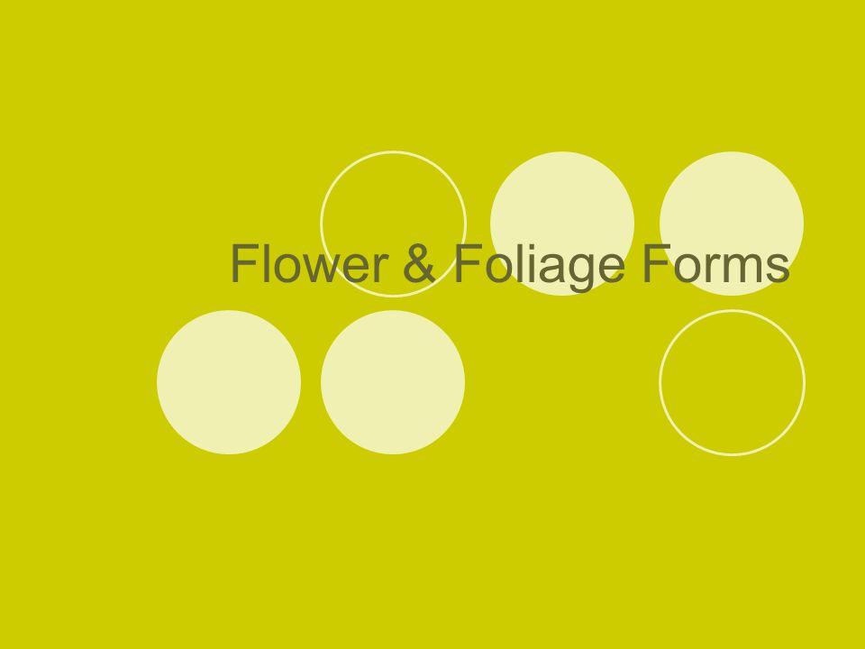 Line material : any flower with a spike or spike-like inflorescence with an elongated stem; elongated or linear shaped foliage  Line flowers  Line foliage