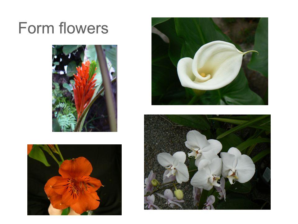 Form foliage