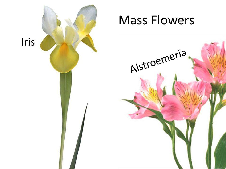 Mass Flowers Iris Alstroemeria