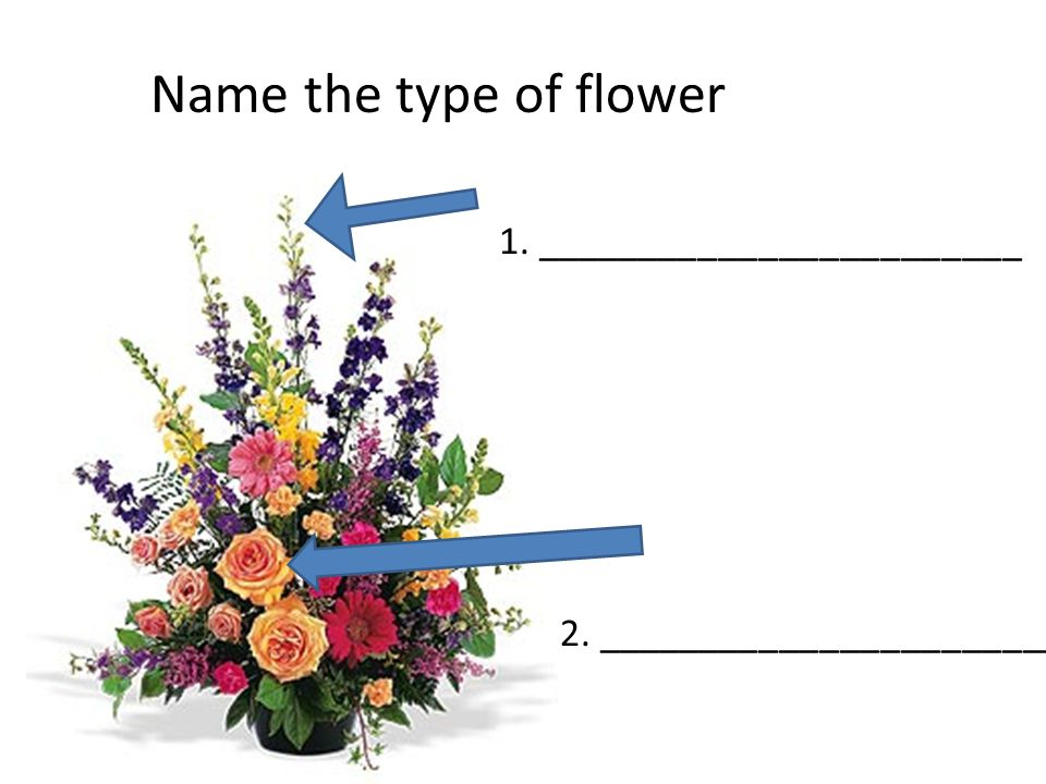 1. ________________________ 2. _________________________ Name the type of flower