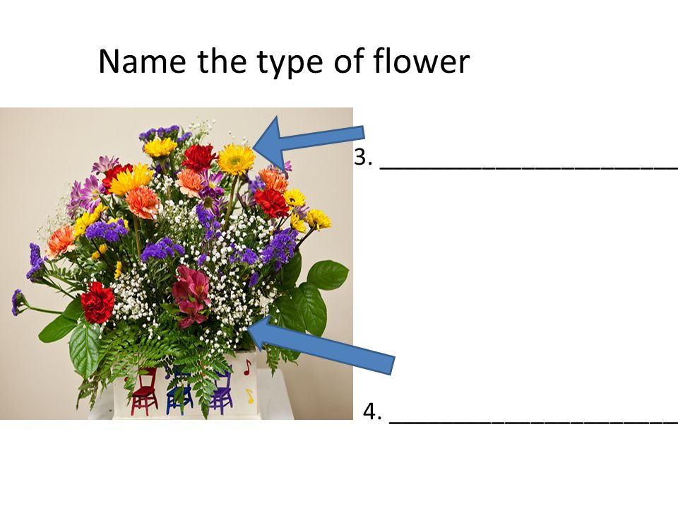 3. ________________________ 4. _________________________ Name the type of flower