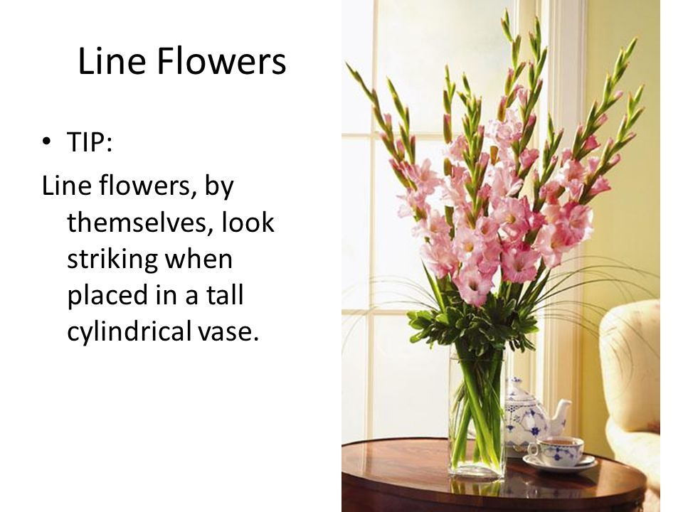 Line Flowers TIP: Line flowers, by themselves, look striking when placed in a tall cylindrical vase.