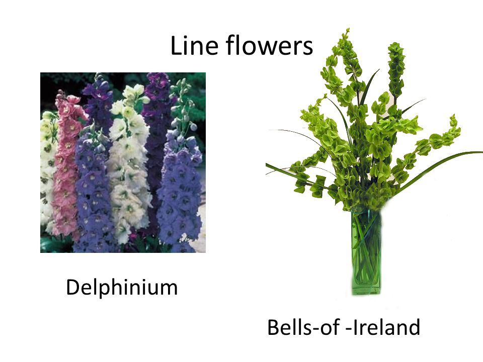 Mass Flowers will give your bouquet weight - or mass - and are generally round and full faced.