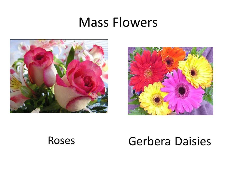 Mass Flowers Roses Gerbera Daisies