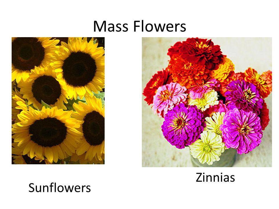 http://www.ehow.com/video_4420464_caring -spring-flower- arrangements.html?wa_vrid=35ccf61d-7fdf- 4045-bd79- b977cc322ed3&pid=1&cp=1&wa_vlsrc=contin uous http://www.ehow.com/video_4420464_caring -spring-flower- arrangements.html?wa_vrid=35ccf61d-7fdf- 4045-bd79- b977cc322ed3&pid=1&cp=1&wa_vlsrc=contin uous