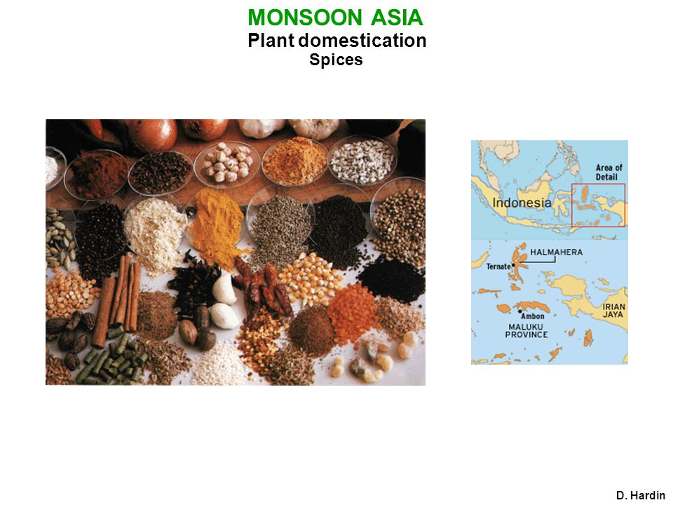 Plant domestication D. Hardin MONSOON ASIA Spices