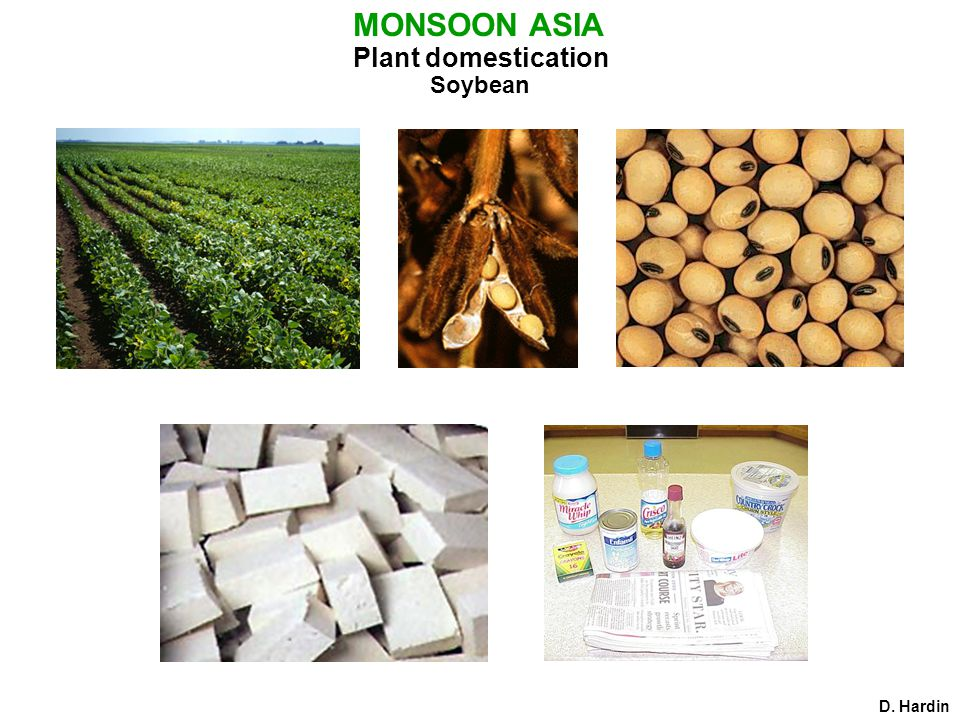 Plant domestication D. Hardin MONSOON ASIA Soybean