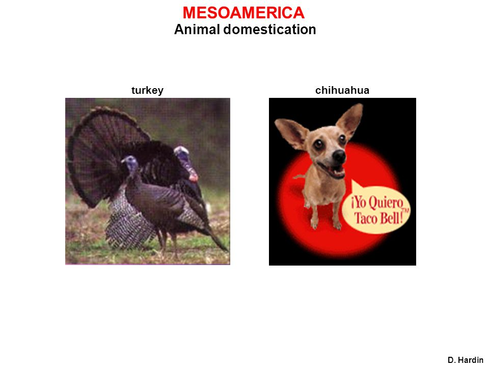 Animal domestication MESOAMERICA D. Hardin turkey chihuahua