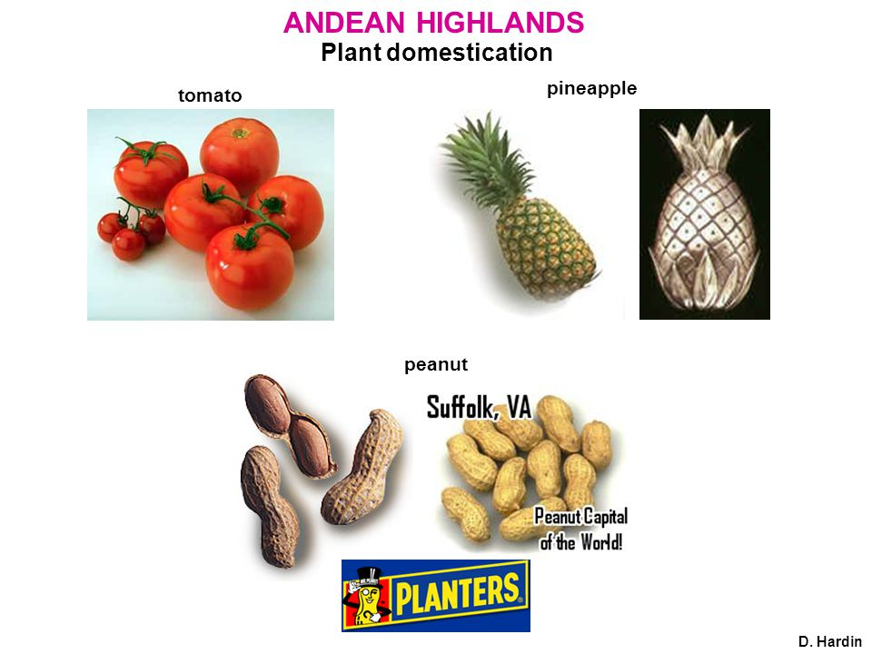 Plant domestication ANDEAN HIGHLANDS tomato pineapple peanut D. Hardin