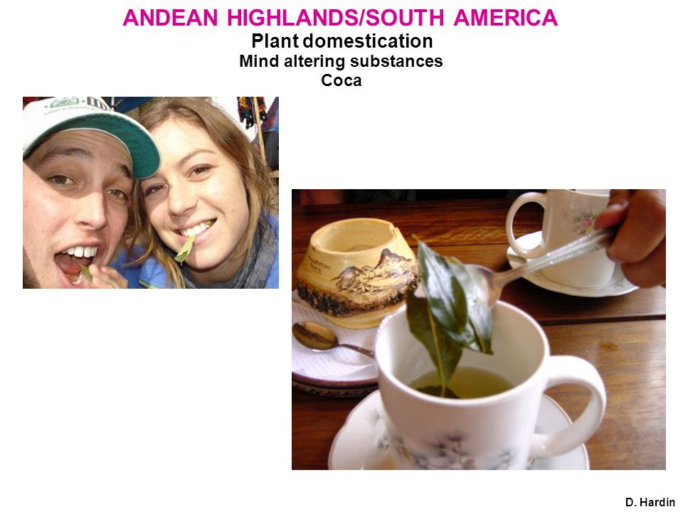 Plant domestication Mind altering substances Coca D. Hardin ANDEAN HIGHLANDS/SOUTH AMERICA