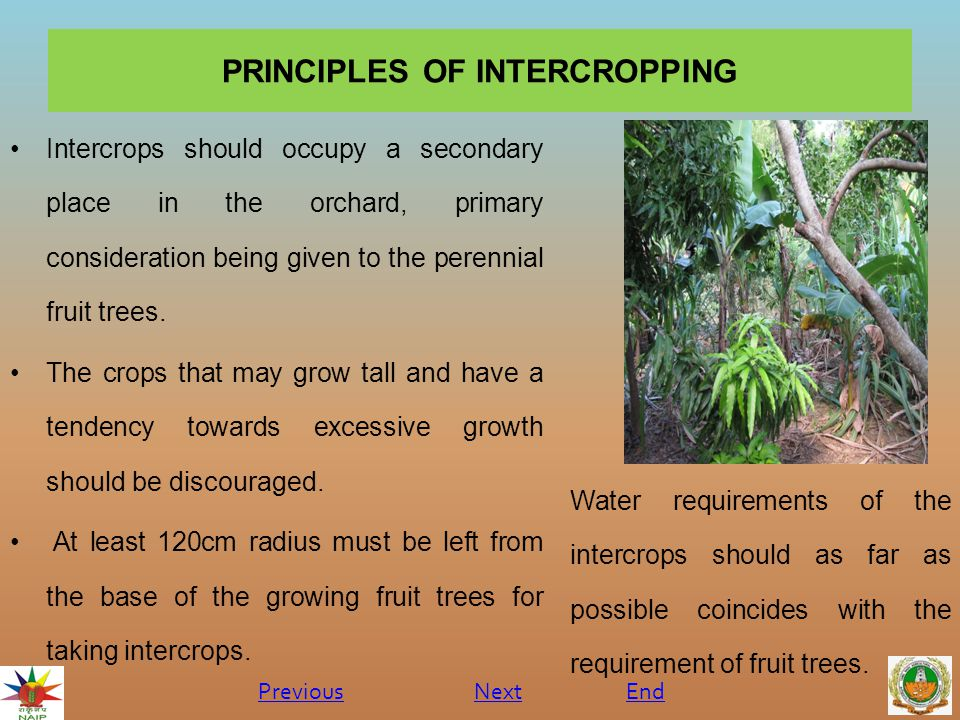 INTRODUCTION  As mango trees take longer time to yield any profit to the grower.